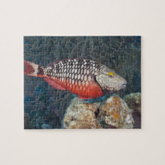 Underwater Life, FISH: a colorful Stoplight Jigsaw Puzzle