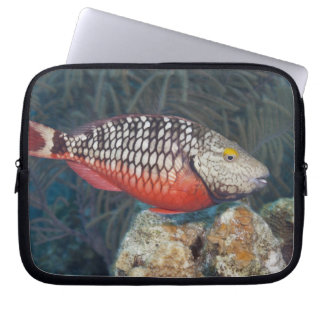 Underwater Life, FISH: a colorful Stoplight Laptop Sleeve