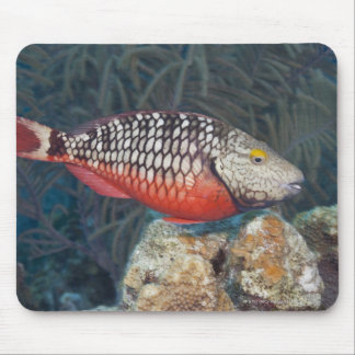 Underwater Life, FISH: a colorful Stoplight Mouse Mat