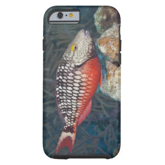Underwater Life, FISH: a colorful Stoplight Tough iPhone 6 Case