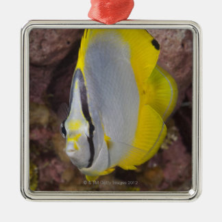 Underwater Life, FISH:  A colorful tropical Christmas Ornament
