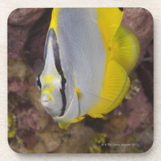 Underwater Life, FISH:  A colorful tropical Coasters