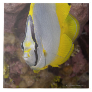 Underwater Life, FISH:  A colorful tropical Large Square Tile