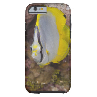 Underwater Life, FISH:  A colorful tropical Tough iPhone 6 Case