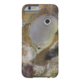 Underwater Life, FISH: A Foureye Butterflyfish Barely There iPhone 6 Case
