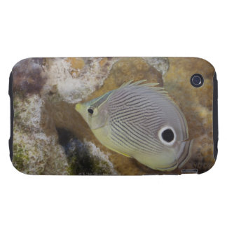 Underwater Life, FISH: A Foureye Butterflyfish iPhone 3 Tough Covers