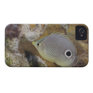 Underwater Life, FISH: A Foureye Butterflyfish Case-Mate iPhone 4 Cases