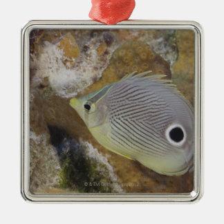 Underwater Life, FISH: A Foureye Butterflyfish Christmas Ornament