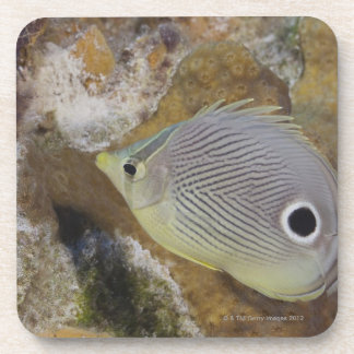Underwater Life, FISH: A Foureye Butterflyfish Coaster
