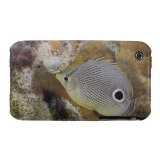 Underwater Life, FISH: A Foureye Butterflyfish iPhone 3 Case