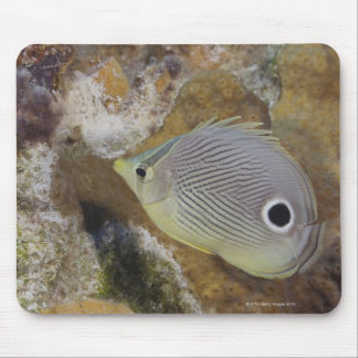 Underwater Life, FISH: A Foureye Butterflyfish Mouse Mat