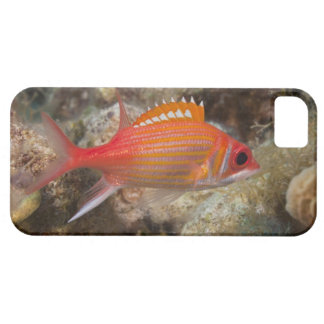Underwater Life, FISH:  a Longjaw Squirrelfish Case For The iPhone 5