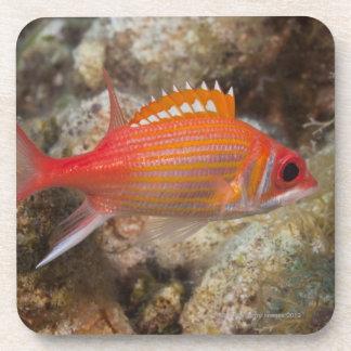 Underwater Life, FISH:  a Longjaw Squirrelfish Coaster