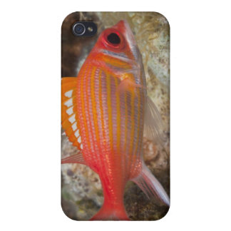 Underwater Life, FISH: a Longjaw Squirrelfish iPhone 4 Case