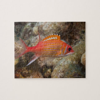 Underwater Life, FISH:  a Longjaw Squirrelfish Jigsaw Puzzle