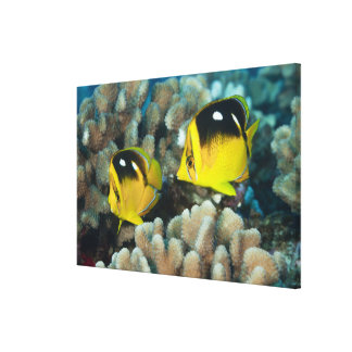 Underwater Life; FISH:  A pair of Fourspot Canvas Print