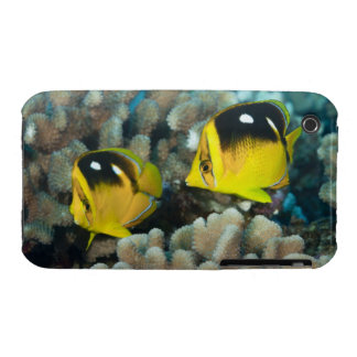 Underwater Life; FISH:  A pair of Fourspot iPhone 3 Case-Mate Case