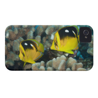 Underwater Life; FISH:  A pair of Fourspot iPhone 4 Case