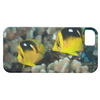 Underwater Life; FISH:  A pair of Fourspot iPhone 5 Covers