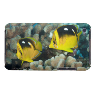 Underwater Life; FISH:  A pair of Fourspot iPod Case-Mate Case
