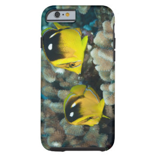 Underwater Life; FISH:  A pair of Fourspot Tough iPhone 6 Case