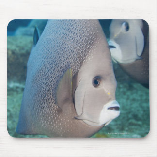 Underwater Life, FISH:  a pair of Gray Angelfish Mouse Mat