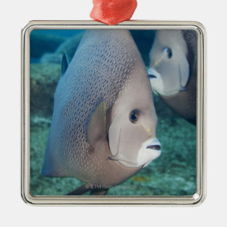 Underwater Life, FISH:  a pair of Gray Angelfish Silver-Colored Square Decoration