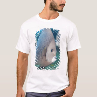 Underwater Life, FISH:  a pair of Gray Angelfish T-Shirt