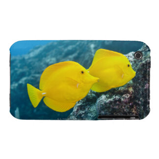 Underwater life; FISH: A Pair of Yellow Tangs iPhone 3 Cases