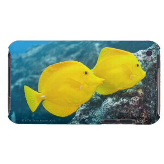 Underwater life; FISH: A Pair of Yellow Tangs iPod Case-Mate Cases