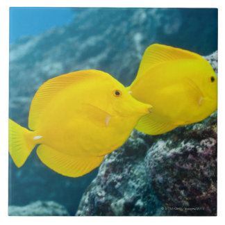 Underwater life; FISH: A Pair of Yellow Tangs Large Square Tile
