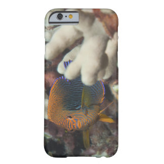 Underwater life; FISH: A portrait of a Potter's Barely There iPhone 6 Case