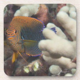 Underwater life; FISH: A portrait of a Potter's Beverage Coasters