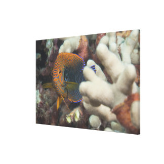 Underwater life; FISH: A portrait of a Potter's Canvas Print