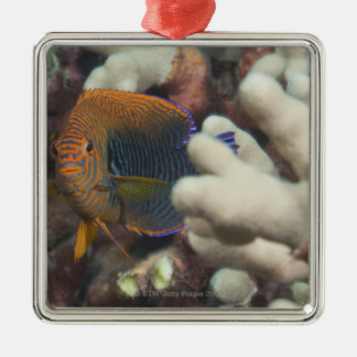 Underwater life; FISH: A portrait of a Potter's Christmas Ornament
