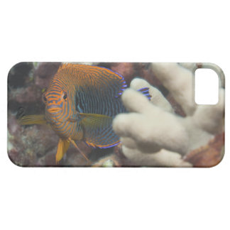 Underwater life; FISH: A portrait of a Potter's iPhone 5 Cover