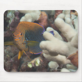 Underwater life; FISH: A portrait of a Potter's Mouse Mat