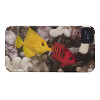 Underwater life; FISH: A Yellow Tang (Zebrasoma Case-Mate iPhone 4 Cases