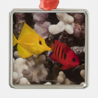 Underwater life; FISH: A Yellow Tang (Zebrasoma Christmas Ornament