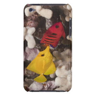 Underwater life; FISH: A Yellow Tang (Zebrasoma iPod Case-Mate Case