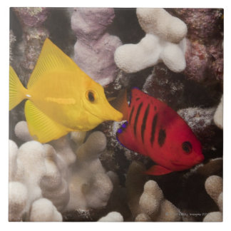 Underwater life; FISH: A Yellow Tang (Zebrasoma Large Square Tile