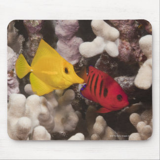 Underwater life; FISH: A Yellow Tang (Zebrasoma Mouse Mat