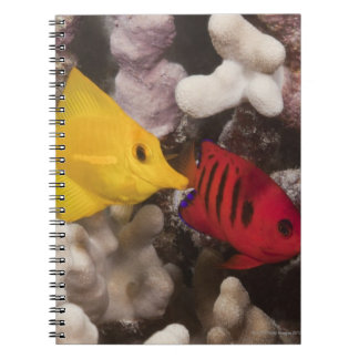Underwater life; FISH: A Yellow Tang (Zebrasoma Notebook