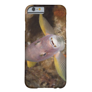 Underwater Life; FISH:  Close up portrait of a Barely There iPhone 6 Case