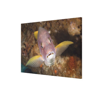 Underwater Life; FISH:  Close up portrait of a Canvas Print