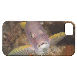Underwater Life; FISH:  Close up portrait of a Case For The iPhone 5