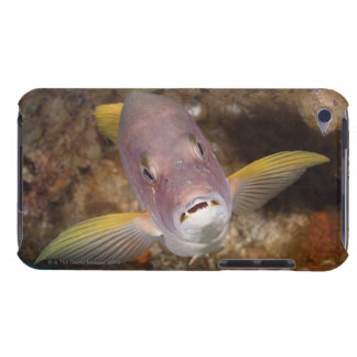 Underwater Life; FISH:  Close up portrait of a iPod Touch Case
