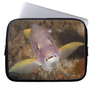 Underwater Life; FISH:  Close up portrait of a Laptop Sleeve