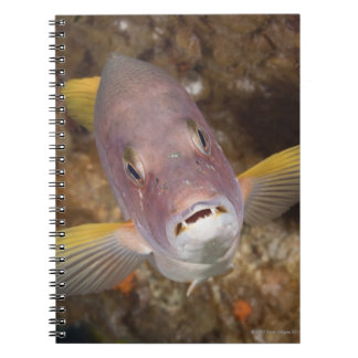 Underwater Life; FISH:  Close up portrait of a Notebooks