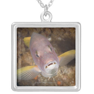 Underwater Life; FISH:  Close up portrait of a Silver Plated Necklace